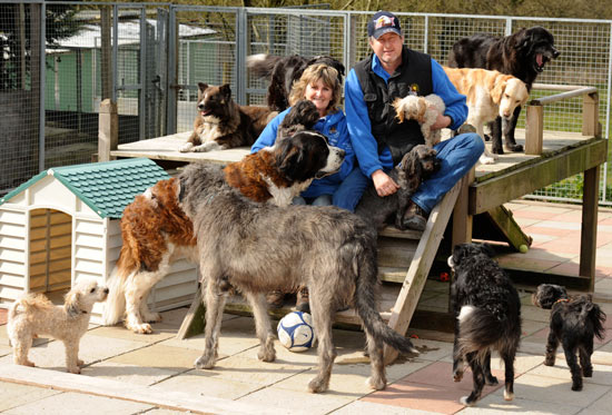 Dog Rescue Centres South Wales