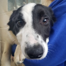Many Tears Dogs Looking For Homes